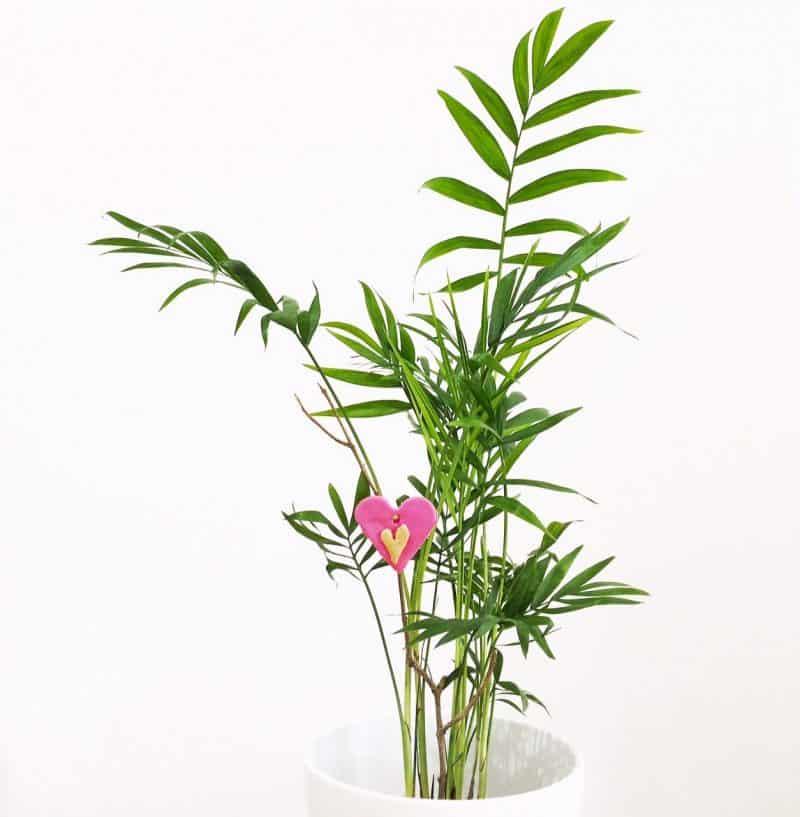 nature craft, valentines craft, heart plant
