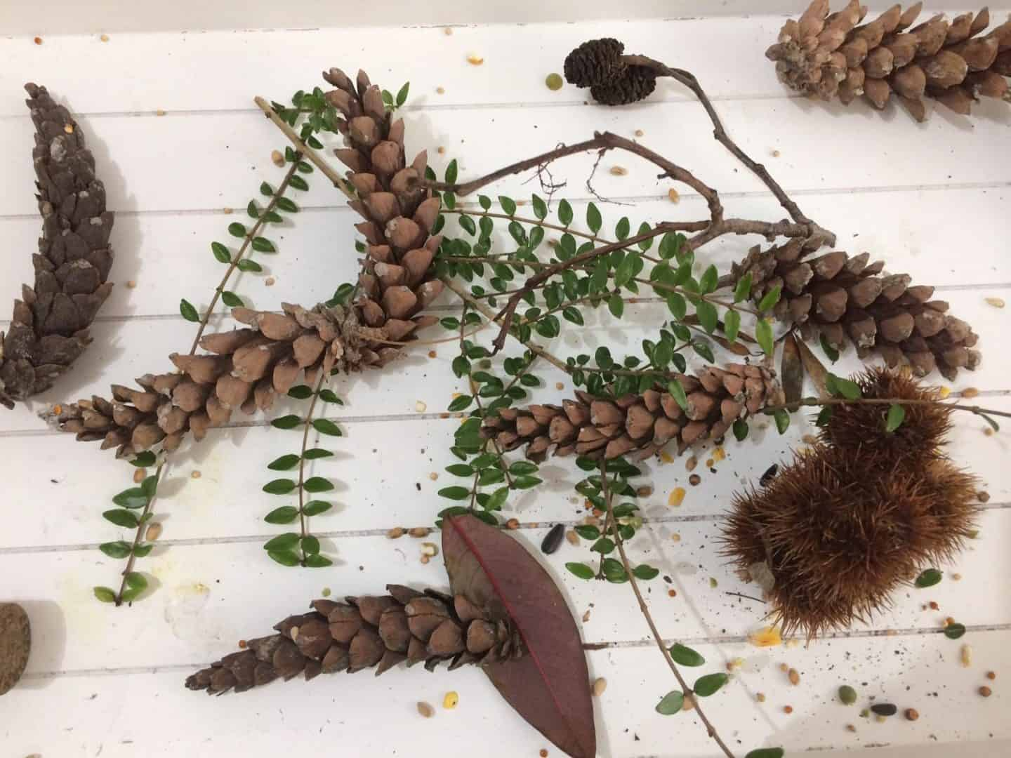 A simple pinecone nature craft  #naturallycrafty