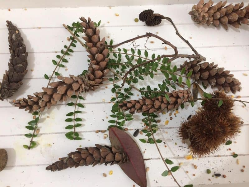 pinecone nature craft