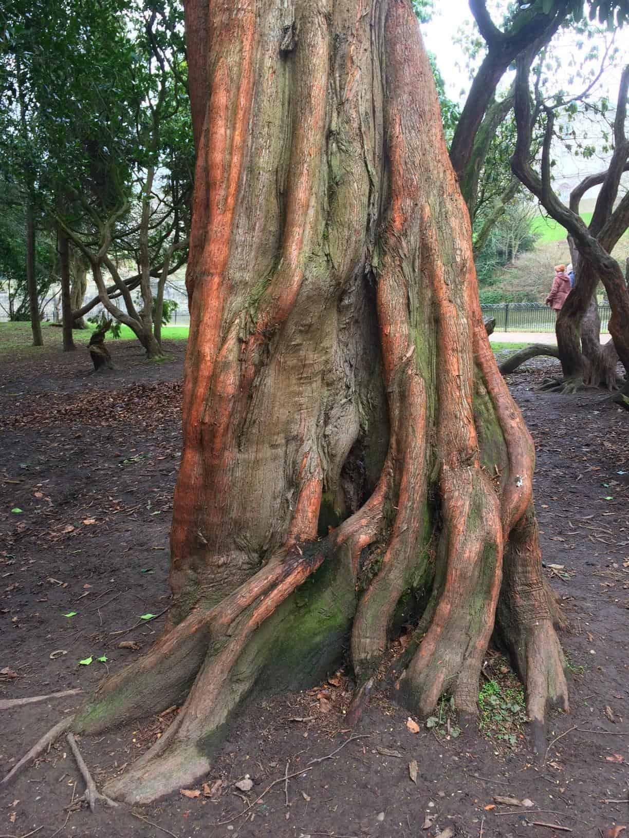 Roots #mysundayphoto