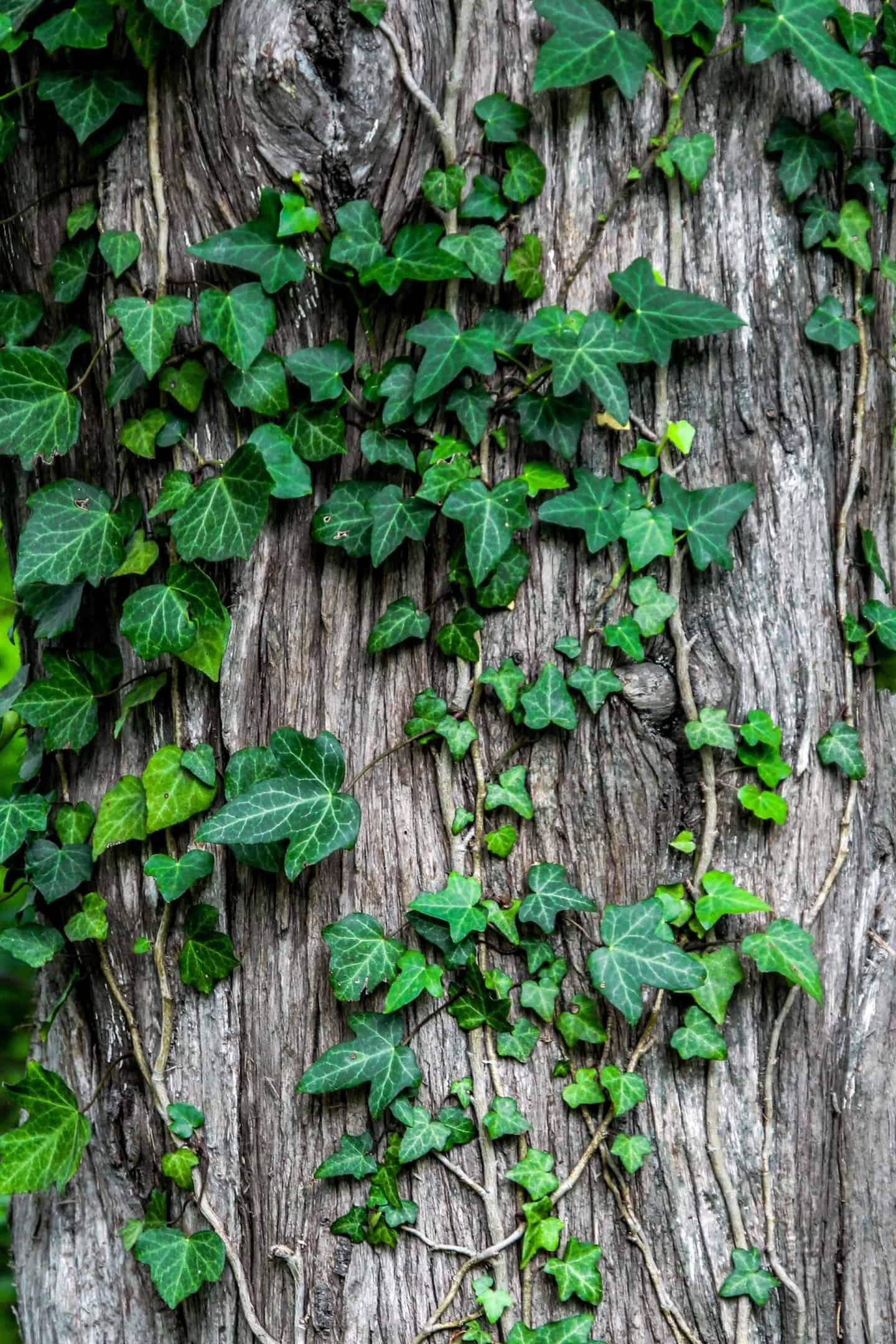 How to remove a tree safely from your garden