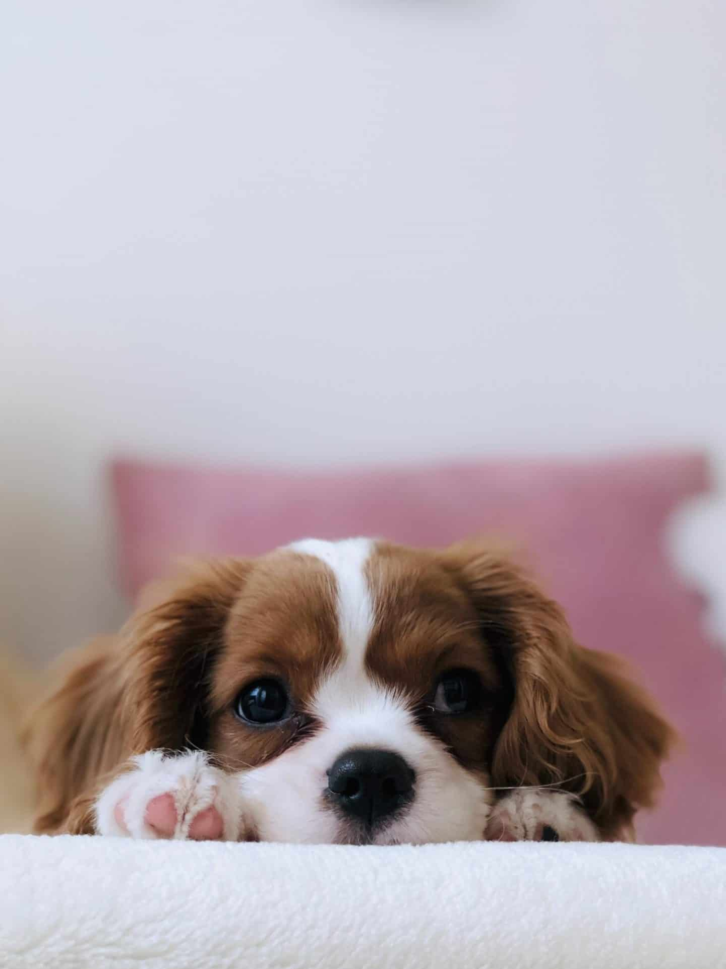 Ways to Calm Your Puppy Down